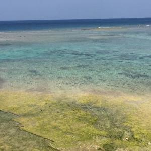 JALダイナミックパッケージで春の沖縄へ♪ 【飛行機・空弁編】