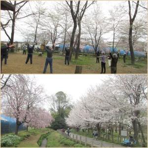 わが町の桜