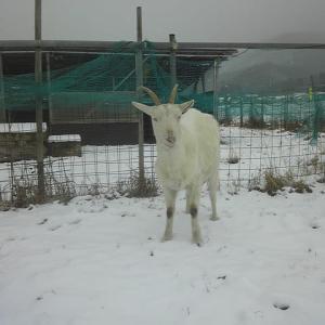 曇り時々雪(積雪3cm)