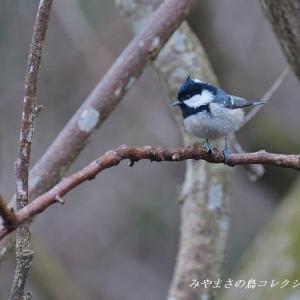 今日の鳥コレクション・・・お山で観れた