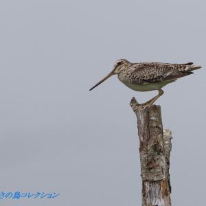 今日の鳥コレクション・・・高原で