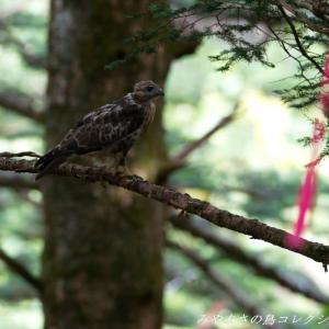 今日の鳥コレクション・・・お山で
