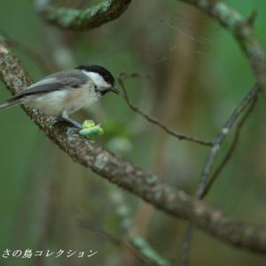 今日の鳥コレクション・・・誰もいないお山で②