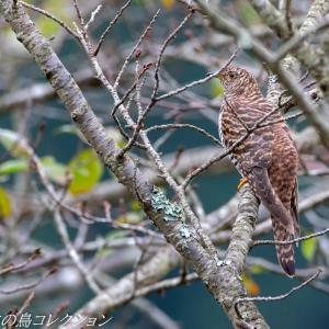 今日の鳥コレクション・・・今季も観れたが