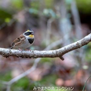 今日の鳥コレクション・・・静かなお山で