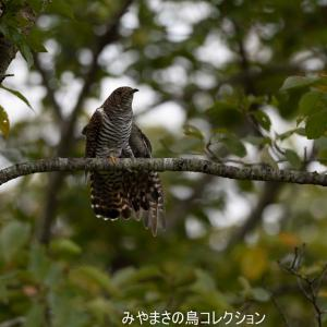 今日の鳥コレクション・・・ストレッチ