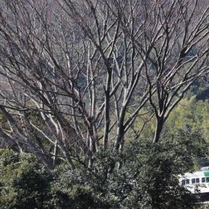 さらば185系踊り子号、相模湾を望む伊豆急川奈~富戸から