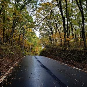 野尻湖周遊道路は紅葉見頃♪