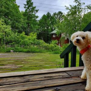アース君!雨の日は、お散歩行かなーい!!