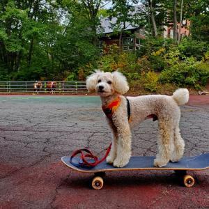 スケーター ^^