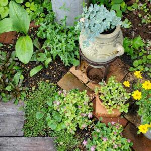お庭仕事が楽しすぎて~ ^^