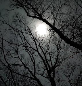 芽吹きの森の気づきセラピー  モニターさん募集します。
