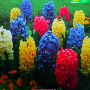 【ガーデン用品】春が待ち遠しい♪お買い物。