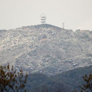 六甲山に雪が!