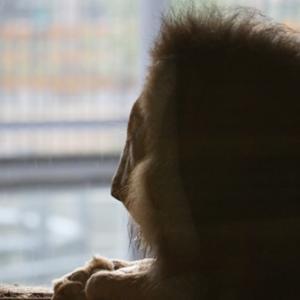 円山動物園 アフリカゾーンの動物達 『何だべな?』