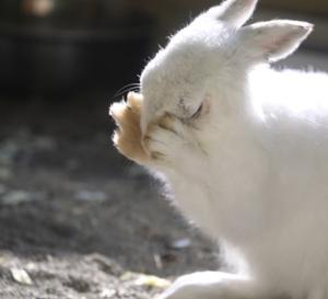円山動物園 エゾユキウサギ&サル山 『意味深な表情。』