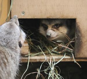 円山動物園 ミーアキャット家族 『一緒に入りたい。』