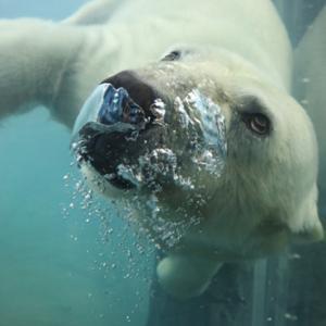 臨時休園前の円山動物園 『水の中の動物達と晴天。』