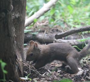 円山動物園 こども動物園  エゾリス&ニワトリ 『静かなる動きと戦い。』