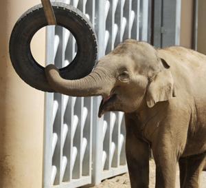 円山動物園 アジアゾウ3頭 『遊び上手。』