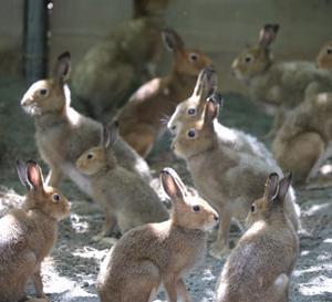 円山動物園 エゾユキウサギ&シロテテナガザル&マレーグマ 『強い日差しの中で。』