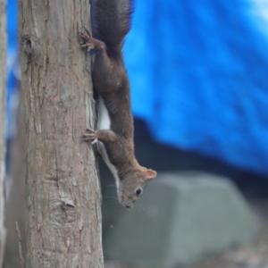 円山公園 エゾリス 『そっと見守る。』