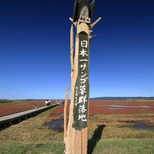 令和元年 九月能取湖サンゴ草