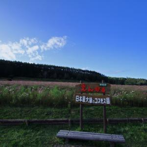 令和元年 9月 太陽の丘えんがる公園(コスモス畑)