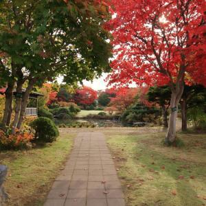 令和元年10月 紅葉の平岡樹芸センター(札幌市)
