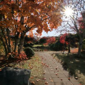 令和元年11月 紅葉の平岡樹芸センター(札幌市)