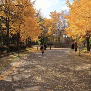 令和元年11月 紅葉の中島公園(札幌市)