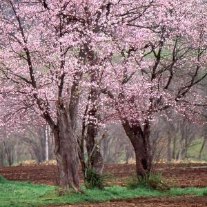 ニセコの四季(リバーサルフイルム使用写真)