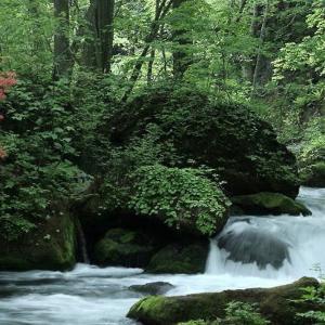 古い写真 春の奥入瀬渓谷(ポジフイルム)