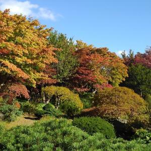 紅葉の平岡樹芸センター