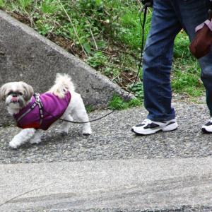 寒いけど散歩ですか~