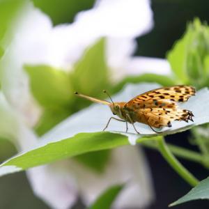 今日見た昆虫たち