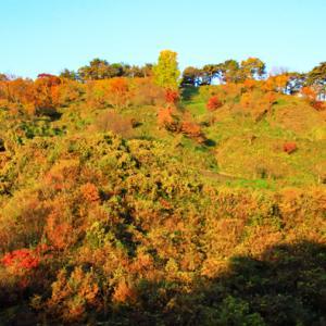 春日山城址からの紅葉