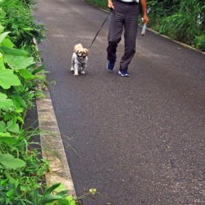 Oさんとレオ君の散歩
