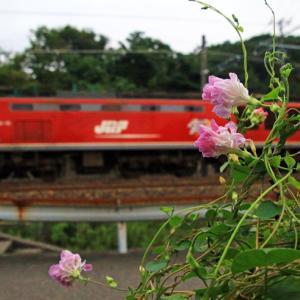 朝顔と貨物機関車