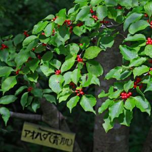 五智公園で見た樹