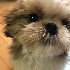 ママ似(^_-)-☆ソックリ