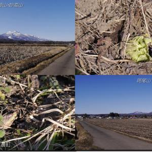 低気圧と前線通過し春一番の荒れ模様!明日は強い冬型へ!!(200222)