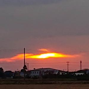 今日の夕陽は微妙と、道端の花シリーズです❗♪v(*'-^*)^☆
