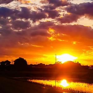 今日の夕陽シリーズです❗♪v(*'-^*)^☆