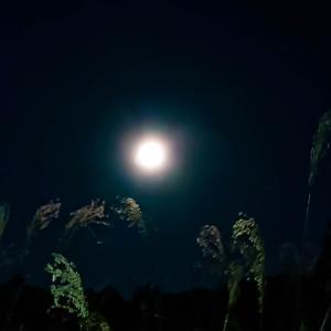 2月の満月は、スノームーンと言うらしい~っ♪v(*'-^*)^☆