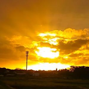今日の、夕陽とサクラちゃんです~っ♪v(*'-^*)^☆