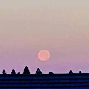 今朝も、満月に出会えました♪v(*'-^*)^☆