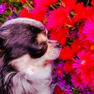 今日は、我が家の愛犬です~っヽ(*´∀`)ノ♪