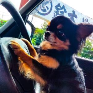 モモちゃんの、運転で葡萄園へ~っ(*^O^*)