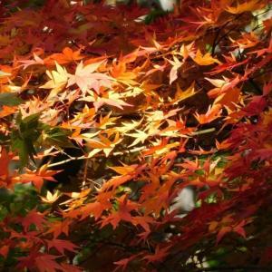 野幌原始林を紅葉狩り